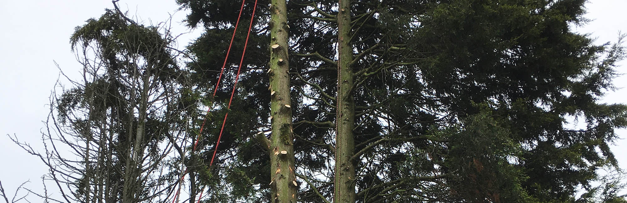Tree Surgery & Maintenance Services
