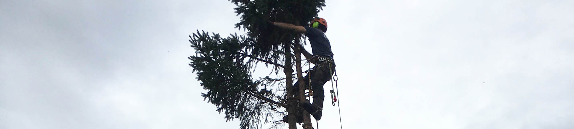 Tree Surgeons - Nottingham